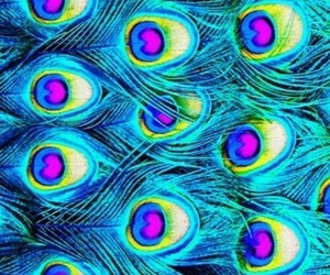 colores, pavo real, and colors image