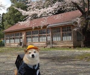 dog, japan, and animal image