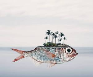 fish, art, and surrealism image