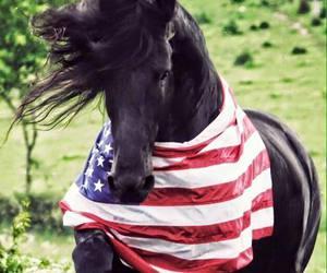 animals, black horse, and horse image