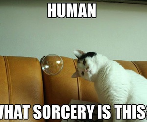 cat, bubbles, and funny image