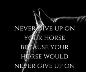 horse, equestrian, and never give up image