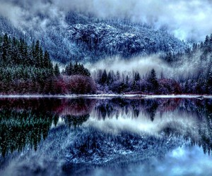 winter, forest, and lake image
