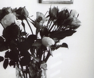 black and white, flowers, and roses image