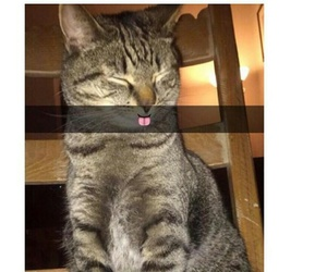 cat, funny, and snapchat image