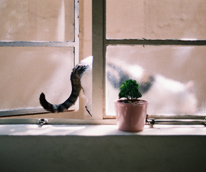 cat and window image