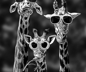 giraffe, animal, and funny image