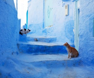 cat and morocco image