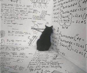cat, math, and animal image