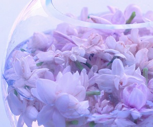 flowers, purple flowers, and wallpapers image