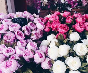 flowers, luxury, and pink image