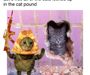 cat, pizza, and pizzacat image