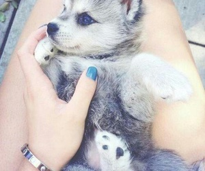 adorable, inspirations, and nature image