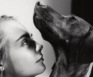 cara delevingne and dog image