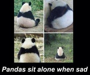panda, sad, and alone image