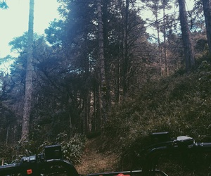 adventure, beautiful, and forest image