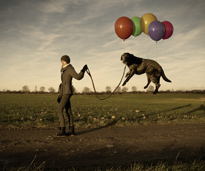 dog, balloons, and funny image