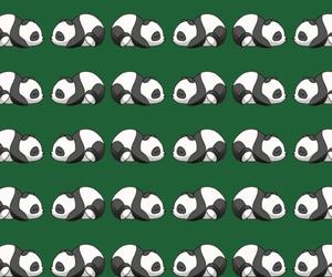 blanco, negro, and panda image