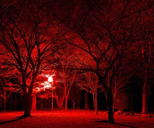 red, tree, and light image