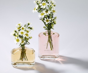 daisy, perfume, and flowers image