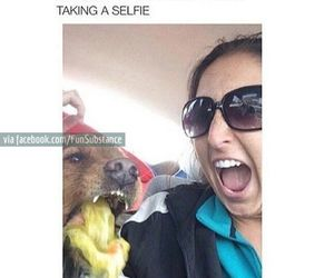 funny, dog, and selfie image