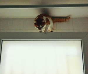 cat, help, and window image