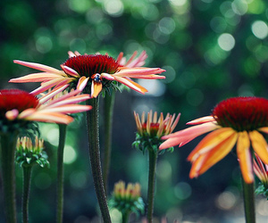 flower and pretty image