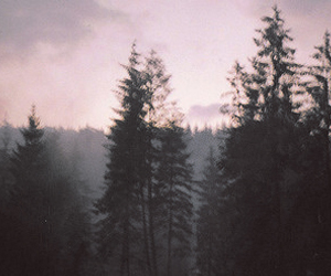 black, nature, and pink image