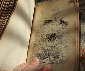 bees, birds, and book image