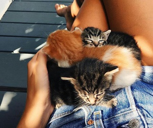 adorable, girl, and kittens image