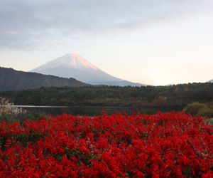 landscape, flowers, and red image