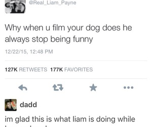 dog, twitter, and liam payne image