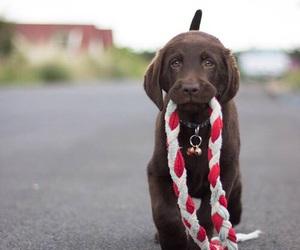 adorable, animals, and chocolate image