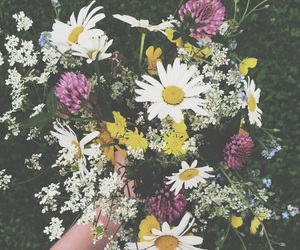 colour, flowers, and life image