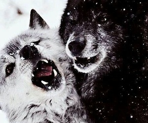 wolf and cute image
