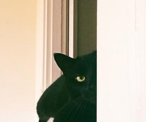 black cat, cat, and vsco image