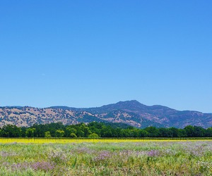 landscape, napa valley, and nature image