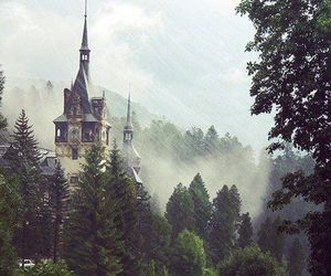 romania, nature, and forest image