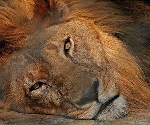 amazing, incrible, and animal image
