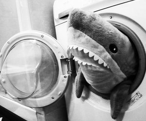 shark, black and white, and funny image