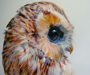 owl, art, and animal image