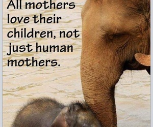 animals, children, and quote image