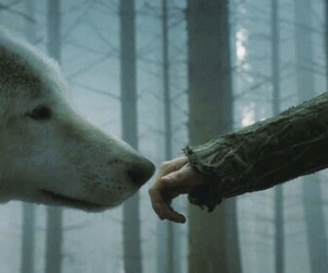 wolf and game of thrones image