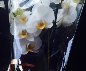 gift, mother, and orchid image