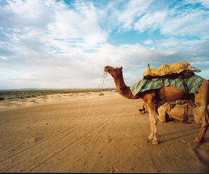 camel, india, and rajasthan image
