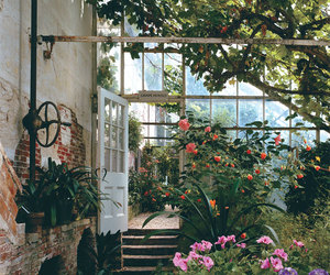 garden, greenhouse, and photography image