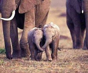 animals, cute, and africa image