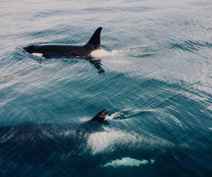 ocean, animal, and summer image