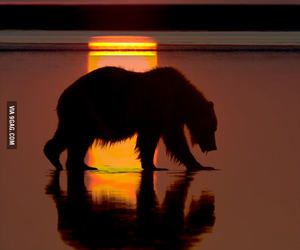 9gag, bear, and sundown image