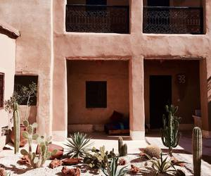 cactus and home image